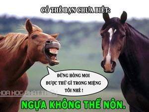 ĐỘC-LẠ: Ngựa không biết nôn, ăn cá hồi dễ có con hơn