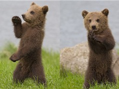 """""""Phát sốt"""" với màn biểu diễn kungfu của gấu con"""