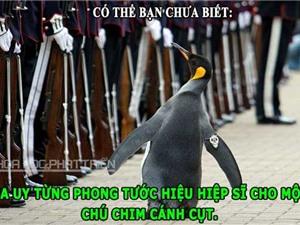 ĐỘC-LẠ: Chim cánh cụt trở thành hiệp sĩ, thuốc nổ làm từ đậu phộng
