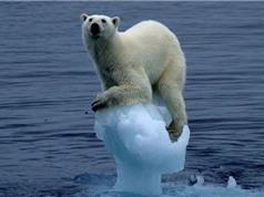 Cận cảnh sự đáng sợ của hiện tượng nóng lên toàn cầu