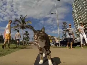 Clip: Mèo biết trượt ván, chơi trò đập tay như người
