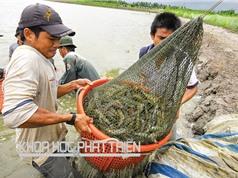 Nuôi trồng thủy sản: Chế phẩm sinh học có thay được kháng sinh?