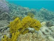 NASA triển khai dự án bảo vệ rạn san hô lớn nhất thế giới