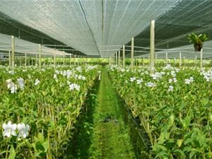 Để sớm có khu nông nghiệp ứng dụng công nghệ cao ở Nghệ An: Cần bổ sung quy hoạch