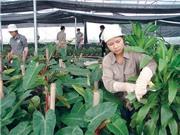 Bộ KH&CN sẽ hỗ trợ Nghệ An, Quảng trị triển khai các đề tài khoa học