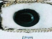 Chiêm ngưỡng viên đá quý 3.000 năm tuổi trị giá 200 triệu USD