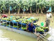 Hiệu quả cao nhờ trồng chuối cấy mô; Việt Nam chính thức ra khuyến cáo ngừng dùng Galaxy Note 7