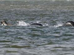 Phát hiện sinh vật lạ giống quái vật hồ Loch Ness