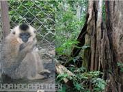 Vườn quốc gia Cát Tiên: Khi rừng kêu cứu