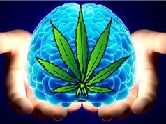 Dùng cần sa gây hại cho não