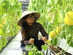 PGS-TS Lê Tất Khương: Kết nối nông dân - doanh nghiệp tăng giá trị cho sản phẩm nông nghiệp