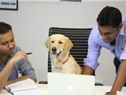 KỲ LẠ: Chó làm sáng lập viên hãng startup với nhiệm vụ đặc biệt