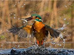 Chùm ảnh đẹp về động vật hoang dã