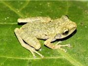 Phát hiện loài ếch cây mới ở Hòa Bình; Giá iPhone 7 giảm xuống dưới 17 triệu đồng