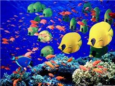 Các loài cá cũng biết hát đồng ca