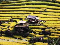 Mang tài sản trí tuệ đến gạo già dui Hà Giang