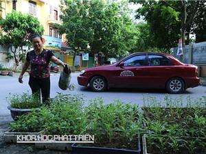 Ô nhiễm bủa vây rau đô thị