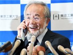 Điều gì giúp nhà khoa học Nhật Bản giành giải Nobel Y học 2016