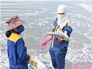 Xác định nguyên nhân ban đầu làm cá Hồ Tây chết hàng loạt