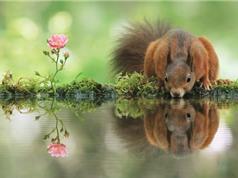 Chùm ảnh đẹp về động vật hoang dã của nhiếp ảnh gia người Áo
