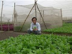 Rau trồng trong đô thị: Nên dùng đất phù sa