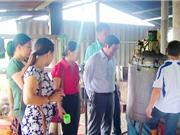 Quảng Trị: Ứng dụng công nghệ tiết kiệm năng lượng vào sản xuất dược liệu