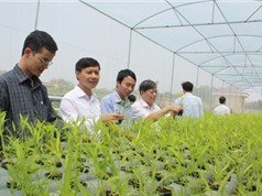 Bắc Giang: Ứng dụng công nghệ cao vào  sản xuất nông nghiệp
