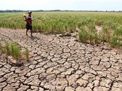 Vấn đề biến đổi khí hậu: Không phải chống mà cần thích ứng