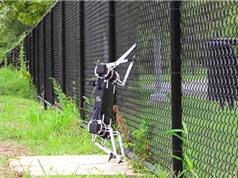 Clip: Robot có thể leo rào, mở cửa với giá 1.500 USD