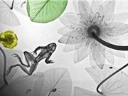 Thiên nhiên hoang dã diệu kỳ qua những bức ảnh X-quang