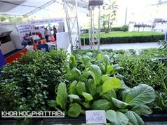 Mô hình trồng rau thủy canh hữu cơ tại gia: Du lịch nửa tháng, về nhà  có rau ăn