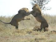 Những bức ảnh về động vật ấn tượng nhất trong tuần qua
