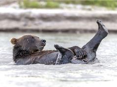 """Phì cười với cảnh gấu nâu """"tắm tiên"""""""