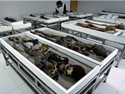 Xác ướp cổ nhất thế giới có nguy cơ phân hủy
