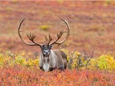 Top 10 động vật sở hữu cặp sừng ấn tượng nhất