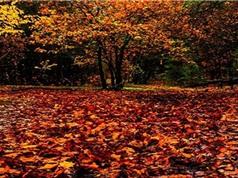 Vì sao lá cây thường rụng vào mùa thu?