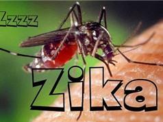 Bùng phát dịch sốt xuất huyết và Zika tại TP.HCM; Tổ chức tiêu huỷ 2 tấn ngà voi và 70 kg sừng tê giác