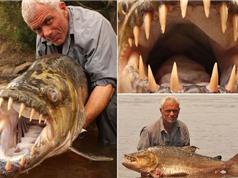 Cá khủng mắc câu: Hành trình săn cá hổ ăn thịt người khổng lồ (kỳ 3)