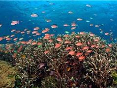 Nghiên cứu về môi trường biển chưa ứng phó được với tình huống bất thường
