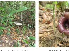 Phát hiện hai loài tỏi rừng mới ở Quảng Ngãi; Singapore ứng dụng thùng rác thông minh, phát wifi