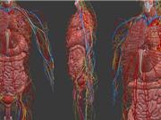 Đại học Duy Tân dạy giải phẫu trên mô hình cơ thể ảo; phát hiện giống cây cao nhất thế giới