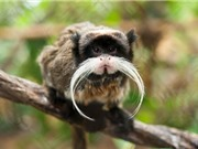 10 loài động vật có bộ râu ấn tượng nhất