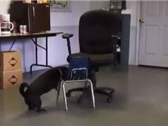 """Clip: """"Ngả mũ"""" với sự thông minh của chú chó"""