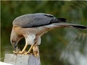 Khai trương không gian chia sẻ ở Thư viện Quốc gia; phát hiện loài chim ăn thịt tại công viên Gia Định