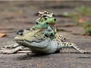 Những khoảnh khắc thú vị và hài hước về loài ếch (phần I)