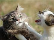 Người phụ nữ để 14 con mèo ăn thịt lẫn nhau ở nhà