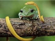 Những khoảnh khắc thú vị và hài hước về loài ếch (phần II)
