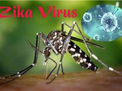 TP.HCM có thêm 83 trường hợp nhiễm Zika