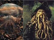 Loài sứa khổng lồ có vẻ ngoài giống quái vật trong truyền thuyết
