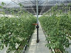 Sắp có hội nghị về xây dựng nền công nghiệp nông nghiệp Việt Nam